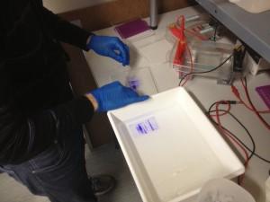 Couverture du gel par une feuille de cellophane. Une plasque se trouve sous mes mains et un cadre se trouve à l'arrière de l'image